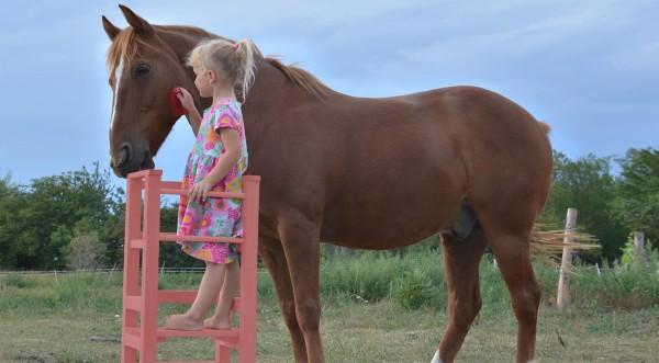 Hladkanie koníka